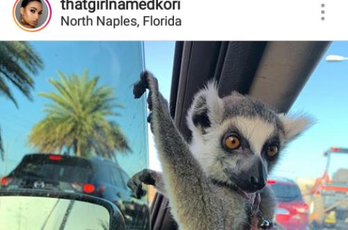 Article : Madagascar sans lémuriens, c'est pour bientôt?